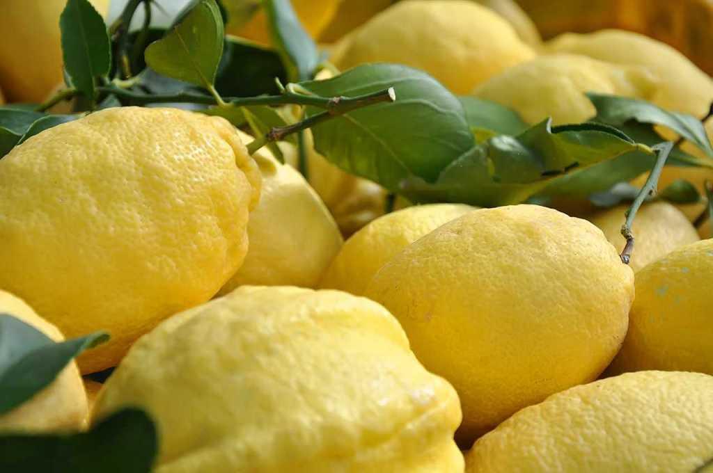 лимоны_амальфи