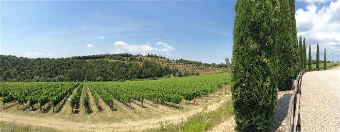 панорама на виноградники в области кьянти